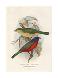 Painted Bunting, Passerina Ciris Giclee Print by Frederick William Frohawk