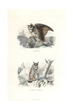 Eurasian Eagle-Owl and Long-Eared Owl Giclee Print by Edouard Travies