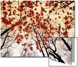 Bare Branches and Red Maple Leaves Growing Alongside the Highway Poster by Raymond Gehman