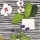 Hothouse Orchids II Impression giclée par Susan Brown