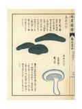 Anutake Mushrooms, Russula Virescens Giclee Print by Kan'en Iwasaki
