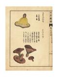 Hatsudake and Sahatsudake Mushrooms, Lactarius Hatsudake Giclee Print by Kan'en Iwasaki