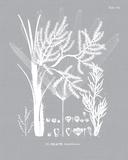 Palmyra IV Impressão giclée por Maria Mendez