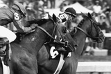 Affirmed Horse Racing Archival Photo Poster Photo