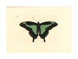 Green-Banded Swallowtail Butterfly, Papilio Phorcas Giclee Print by George Shaw