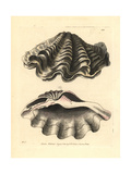 Giant Clam, Tridacna Gigas Vulnerable Giclee Print by Richard Nodder
