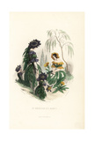Sweet Scabious and Marigold Flower Fairies Giclee Print by Jean Ignace Grandville