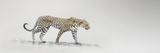 White Leopard Giclee Print by Bobbie Goodrich