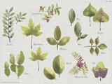 New Leaves II Posters by Sandra Jacobs