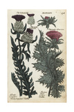 Woolly Headed Thistle and Milk or Lady's Thistle Giclee Print