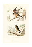Kestrel and Merlin Giclee Print by Edouard Travies