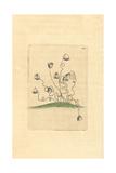 Vorticella Convallaria, Protozoan Giclee Print by Frederick Nodder