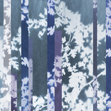 Oriental Thorn Giclee Print by Sarah Cheyne