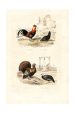 Chickens, Wild Turkey and Guineafowl Giclee Print by Edouard Travies