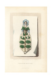 Dried Periwinkle Flower Fairy, Vinca Major Giclee Print by Jean Ignace Grandville