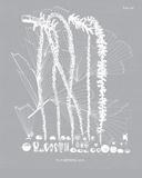 Palmyra III Impressão giclée por Maria Mendez