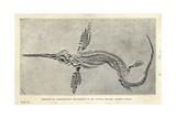 Leptonectes Tenuirostris Skeleton Giclee Print