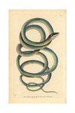Lora or Parrot Snake, Leptophis Ahaetulla Giclee Print by Richard Nodder