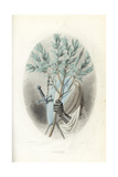Emblematic Illustration of the Laurel, Laurus Nobilis Giclee Print by Jean Ignace Grandville