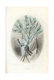 Emblematic Illustration of the Laurel, Laurus Nobilis Giclee Print by Jean Ignace Grandville