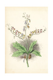 Title Page Illustration with Flower Fairies Hanging from a Plant Giclee Print by Jean Ignace Grandville