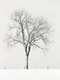 Tree Seasons IV Giclee Print by Bill Coleman
