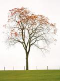 Tree Seasons III Giclee Print by Bill Coleman