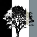 Elm Stripe Giclee Print by Sarah Cheyne