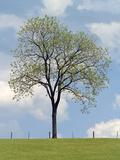 Tree Seasons I Giclee Print by Bill Coleman