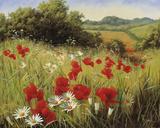 Prado iluminado por el sol Lámina giclée por Mary Dipnall