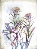 Flower Mist I Giclee Print by Ken Hurd