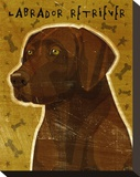 Chocolate Lab Stretched Canvas Print by John Golden