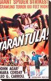Tarantula Stretched Canvas Print