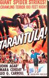 Tarantula Stretched Canvas Print