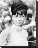 Suzanne Pleshette, The Ugly Dachshund (1966) Stretched Canvas Print