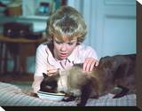 That Darn Cat! (1965) Stretched Canvas Print