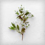 Greener Fragment Photographic Print by Daniela Savone