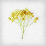 Meditative Yellow Photographic Print by Daniela Savone