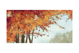 Fall Canopy I Giclee Print by Andrew Michaels