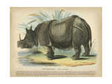 Rhino Giclee Print