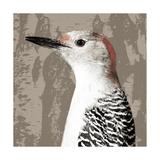 Feathered IV Giclee Print by Anna Polanski