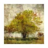 Vintage Tree Giclee Print by Anna Polanski