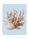 Coral II Giclee Print by Sloane Addison