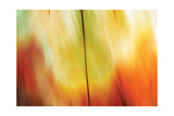Tie Dye I Photographic Print by Andrew Michaels