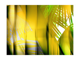 Yellow Shades Photographic Print by Andrew Michaels