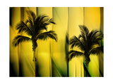 Two Palms Photographic Print by Andrew Michaels
