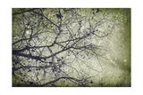 Atmospheric II Giclee Print by Anna Polanski