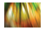 Tie Dye II Photographic Print by Andrew Michaels
