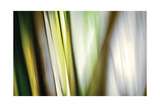 Organic II Photographic Print by Andrew Michaels