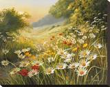 Evening Sun Stretched Canvas Print by Mary Dipnall